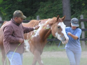 Equine Therapy | Columbia SC